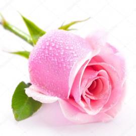 Бленд Нежная роза 100 мл