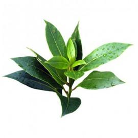 Бленд Лимон и чайное дерево 10 мл.
